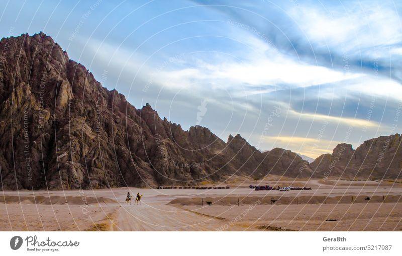 Berge in der Wüste Sharm El Sheikh Ägypten Tiere Kamel Wolken wüst Dromedar exotisch Dunst Höhe Horizont Landschaft Moir Berge u. Gebirge Natur Menschen