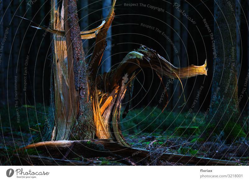 Waldelefant Landwirtschaft Forstwirtschaft Kunst Kunstwerk Skulptur Umwelt Natur Landschaft Herbst Pflanze Baum Menschenleer Holz leuchten Wachstum ästhetisch