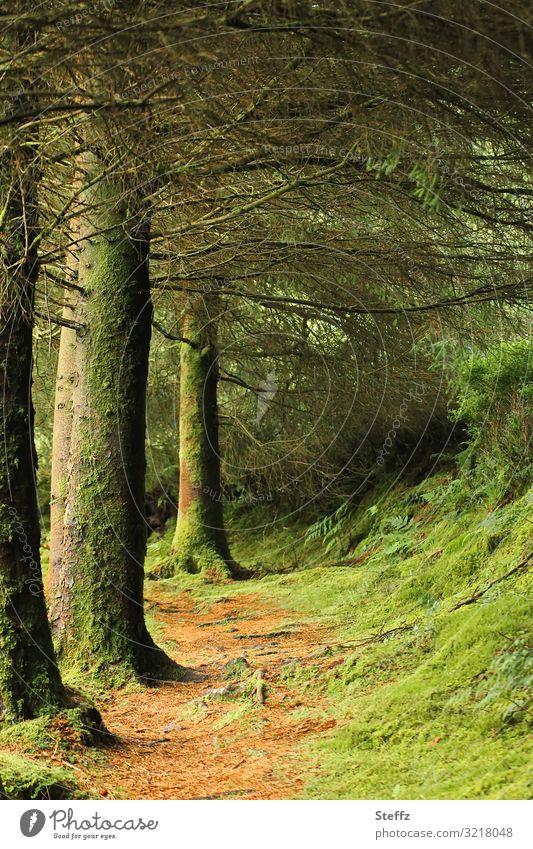 forest path Umwelt Natur Landschaft Sommer Baum Gras Moos Wildpflanze Waldpflanze Republik Irland Nordeuropa Europa Bürgersteig wandern natürlich schön braun