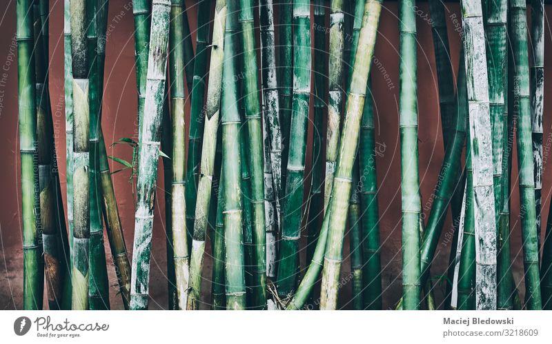 Bambushalme gegen die Wand, orientalischer Hintergrund. Garten Natur Pflanze Gras Wildpflanze Wald dunkel grün Erholung erleben Frieden Gelassenheit Nostalgie