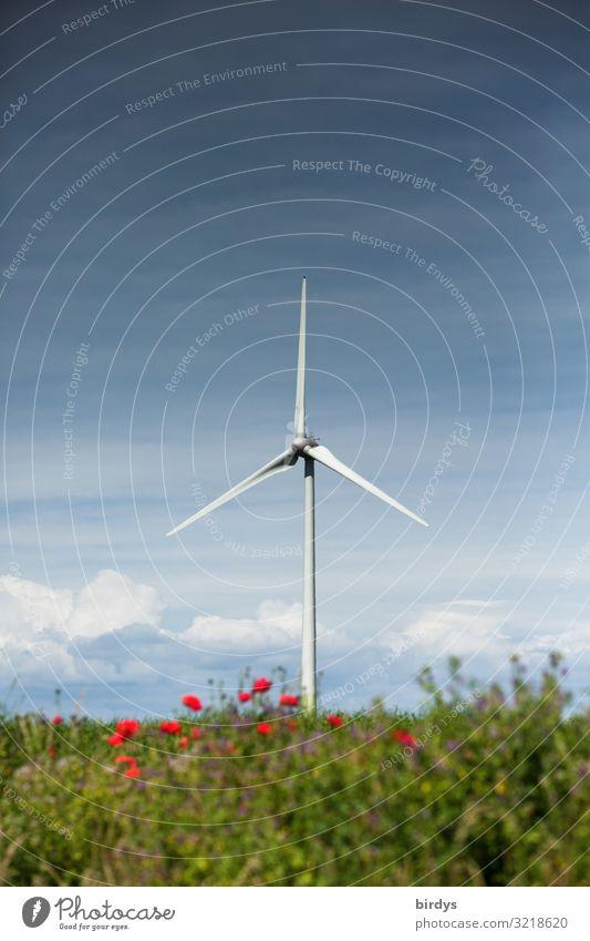 Windenergie Energiewirtschaft Erneuerbare Energie Windkraftanlage Natur Landschaft Himmel Wolken Sommer Klimawandel Blume Sträucher drehen authentisch hoch