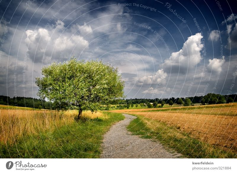 The One Ferne Freiheit Sommer wandern Natur Landschaft Himmel Wolken Schönes Wetter Baum Wiese Feld Hügel Wege & Pfade Unendlichkeit heiß blau braun mehrfarbig