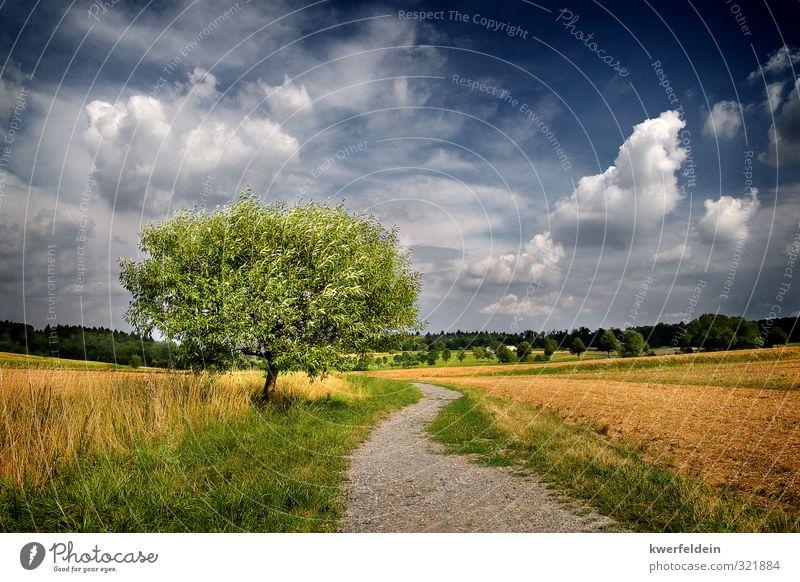 The One Himmel Natur blau grün Sommer Baum Landschaft Wolken Ferne gelb Wiese Wege & Pfade Freiheit braun Zufriedenheit Feld