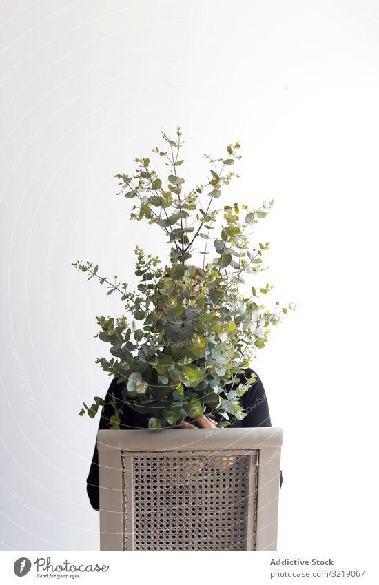 Anonyme Person, die sich hinter Zweigen versteckt Ast Tierhaut Stuhl sitzen Konzept Blatt natürlich organisch Pflanze Baum üppig (Wuchs) Laubwerk Model Sitz