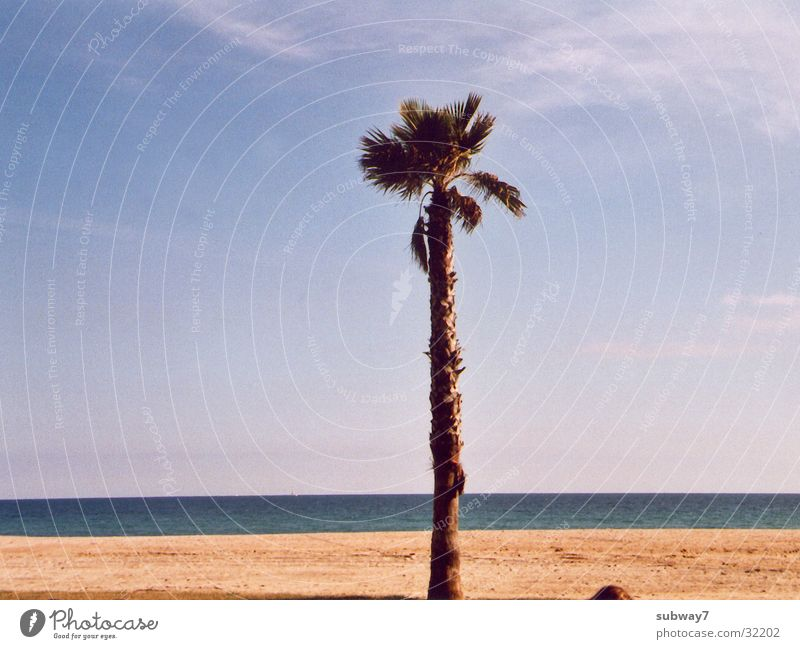 Palmenstrand Sonne Meer Sommer Strand Ferien & Urlaub & Reisen Küste Europa Spanien Barcelona Mittelmeer Badestelle