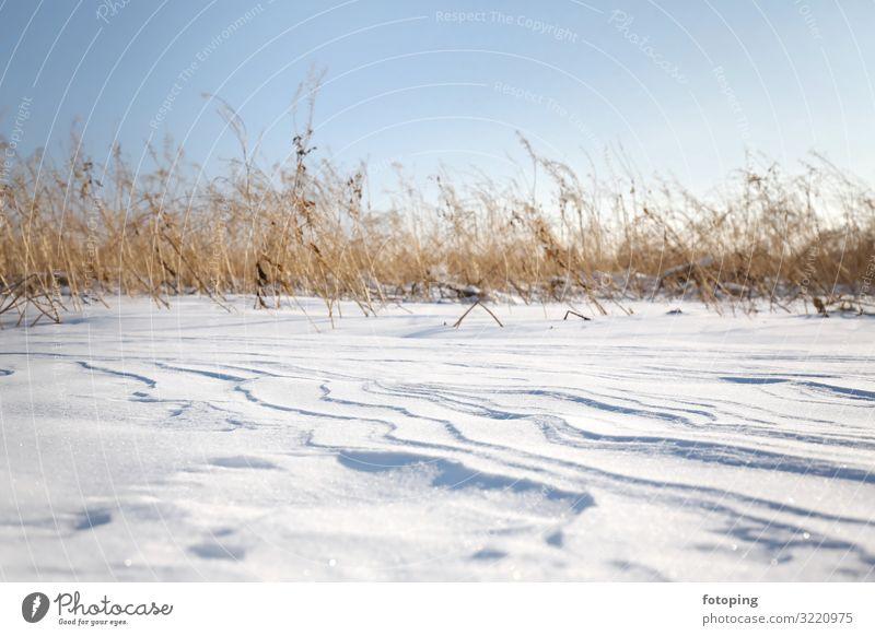 Neuschnee Winter Schnee Natur Landschaft Wind Pflanze Gras kalt weiß Schneewehe Schneedecke Schneelandschaft Dünen Frost gefroren Pulverschnee Erosion