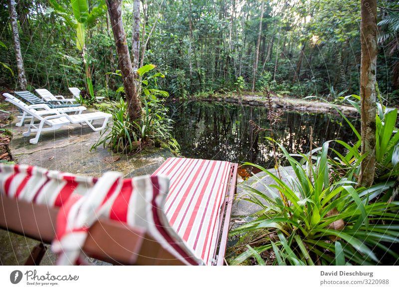 Chilln im Dschungel Ferien & Urlaub & Reisen Abenteuer Expedition Natur Landschaft Pflanze Tier Wasser Schönes Wetter Baum Sträucher Urwald Teich Bach Fluss