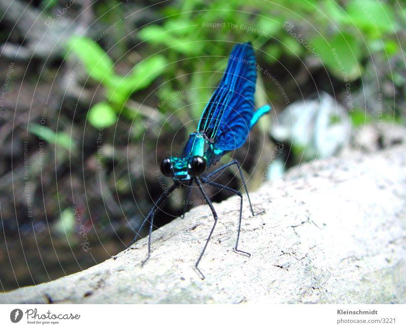 libelle Libelle