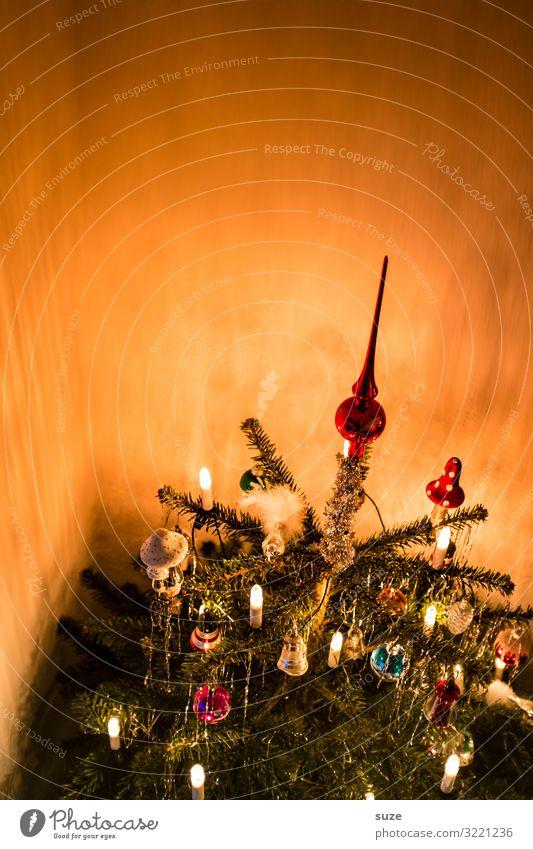 Der Baum steht Häusliches Leben Dekoration & Verzierung Feste & Feiern Weihnachten & Advent Winter schön Stimmung Vorfreude Zusammensein Erwartung Nostalgie