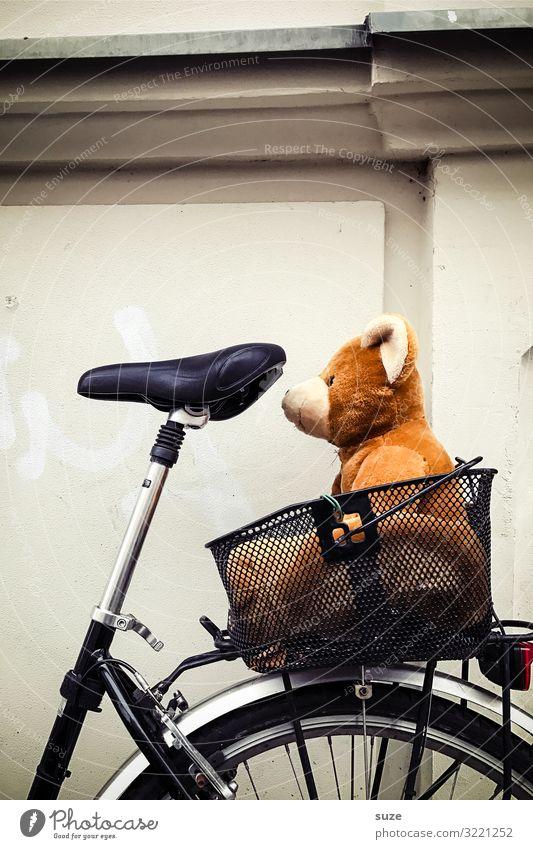 Liebhabär klein braun Fahrrad sitzen Fahrradfahren warten niedlich Fahrradtour tierisch unterwegs Korb Bär Teddybär