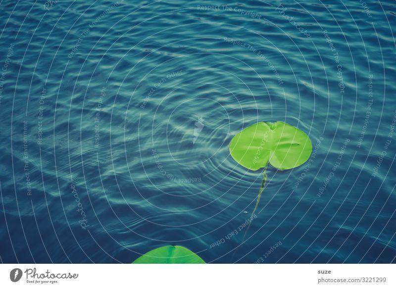 Schwabberndes Treiben Wellness harmonisch Wohlgefühl Erholung Umwelt Natur Pflanze Urelemente Wasser Blatt Wildpflanze Teich See frisch Unendlichkeit kalt