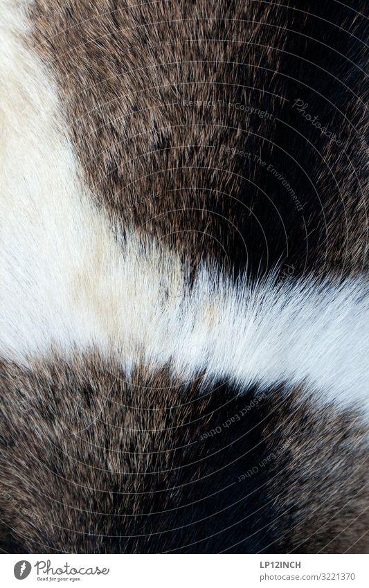 C O A T Tier 1 Wachstum Billig wild weich Tierliebe Design Duft kaufen Handel Liebe rein Qualität Überleben Fellpflege Wärme Ziegen Farbfoto Außenaufnahme