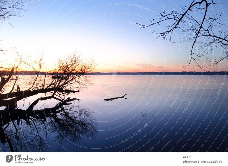 Morgens am See II Himmel Natur blau Wasser Baum Ferne Berlin Horizont Schönes Wetter Romantik Seeufer Weide maritim Nachthimmel Großer Müggelsee
