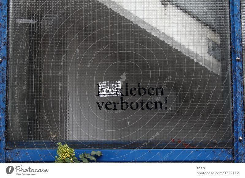 Geschriebenes | leben verboten Stadt Einsamkeit Freude Fenster Gesundheit Leben Wand Traurigkeit Glück Mauer Fassade grau Zufriedenheit Schriftzeichen