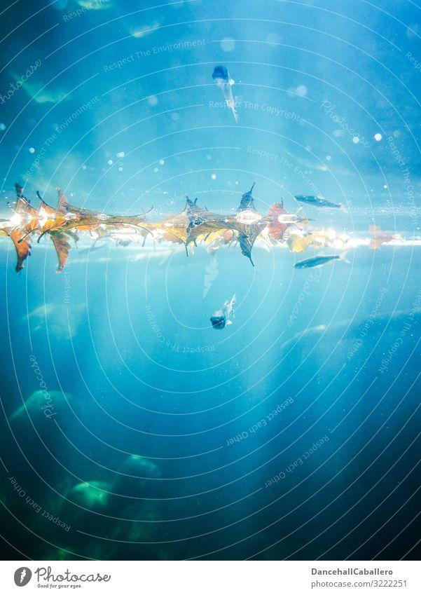 Unterwasserwelt... Natur Wasser Tier Blatt Tierjunges Hintergrundbild Umwelt außergewöhnlich Schwimmen & Baden wild glänzend Wildtier Schönes Wetter Fisch Fluss