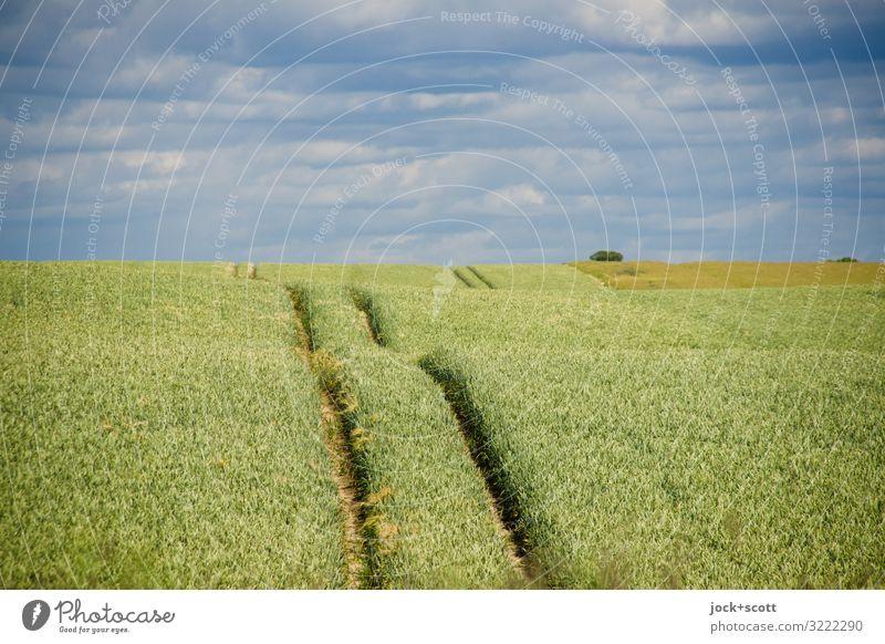 Wechselweizen Landwirtschaft Landschaft Himmel Wolken Sommer Weizenfeld Wachstum authentisch Ferne lang nachhaltig natürlich grün Stimmung Geborgenheit Romantik