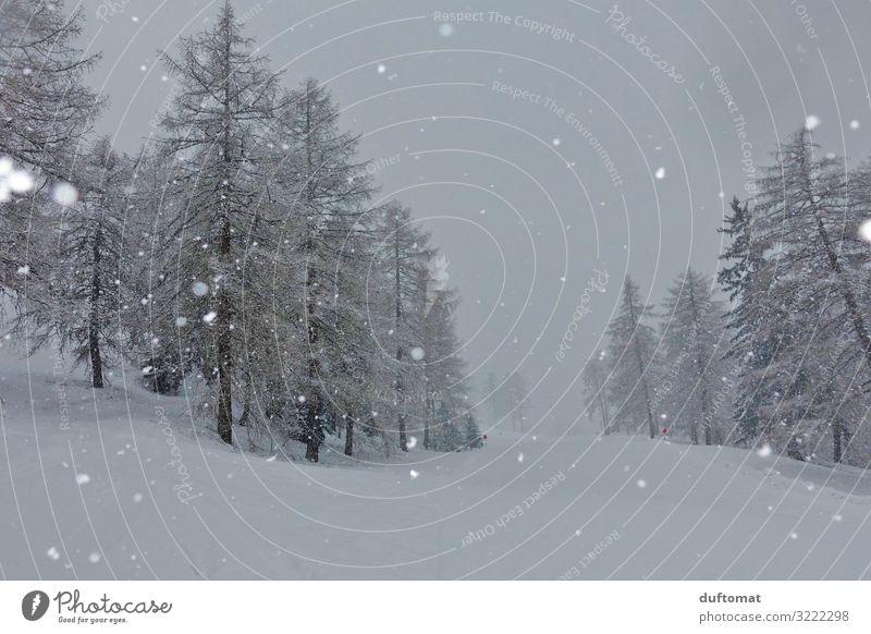 Schneetreiben Abenteuer Winter Winterurlaub Berge u. Gebirge wandern Weihnachten & Advent Skifahren Skier Skipiste Natur Landschaft schlechtes Wetter Nebel