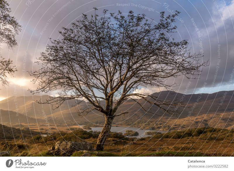 Baum im Regen Ausflug wandern Umwelt Landschaft Wassertropfen Wolken Gewitterwolken Horizont Sonnenlicht Herbst Gras Sträucher Moos Hügel Berge u. Gebirge See
