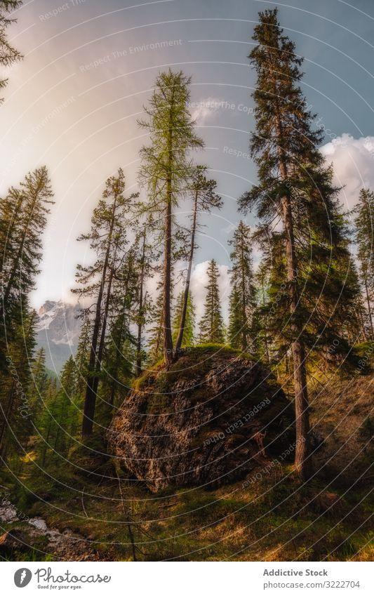 Großer irdener Felsbrocken mit Baum im Kiefernwald Wald malerisch grün Natur atemberaubend Stein Landschaft Vegetation hoch Pflanze Laubwerk Ast Dolomiten
