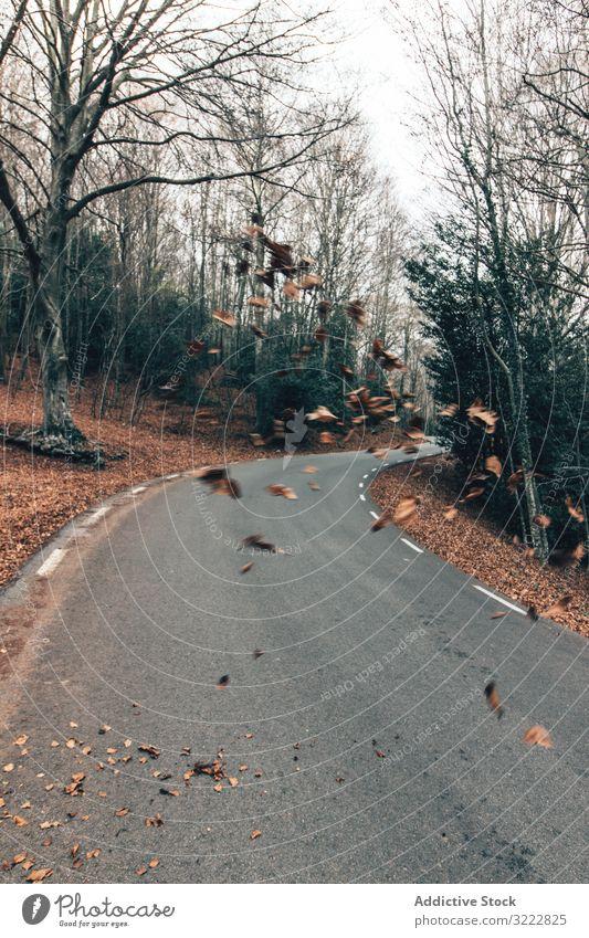 Straße durch den Herbstwald Wald malerisch leer Baum Kurve laublos fallen Frieden Boden Blätter Natur Perspektive Laubwerk Windstille Laufwerk drehen. idyllisch