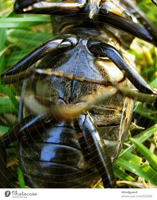 back to the roots   It's only a bug but not a bug   Akzeptiert 20.07.2007 Hirschkäfer Käfer Tod Vergänglichkeit Gelenke Beine Chitin Panzer Schutz pflanze