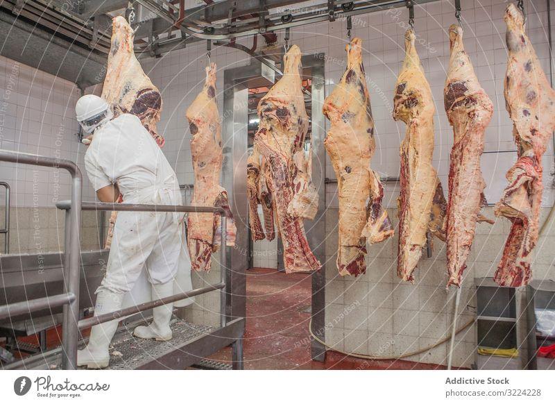 Metzger in einheitlicher Zerlegung des Schlachtkörpers mit Messer im Schlachthof geschnitten Fleisch Uniform roh frisch Rindfleisch Metzgerei hacken Schneiden