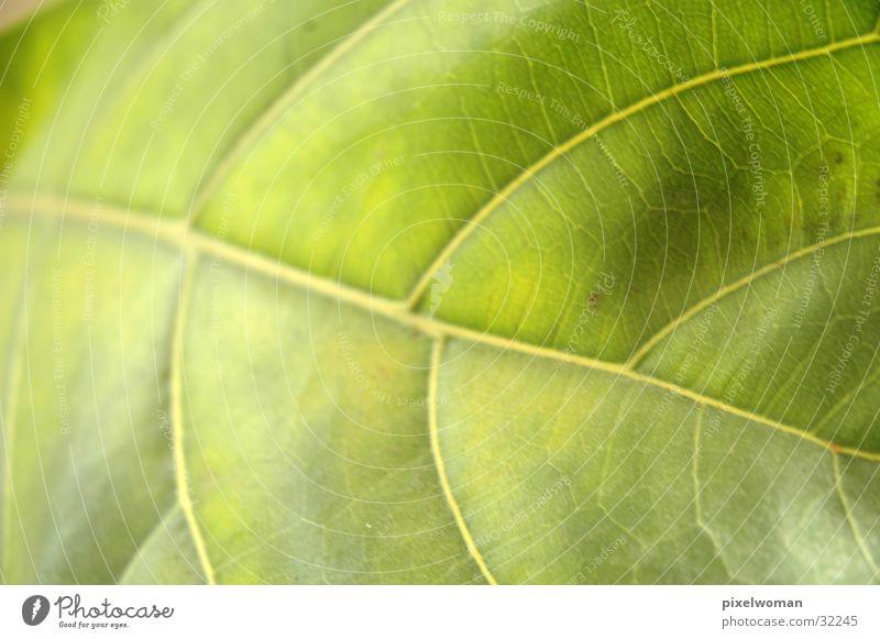 Blatt Natur grün Pflanze