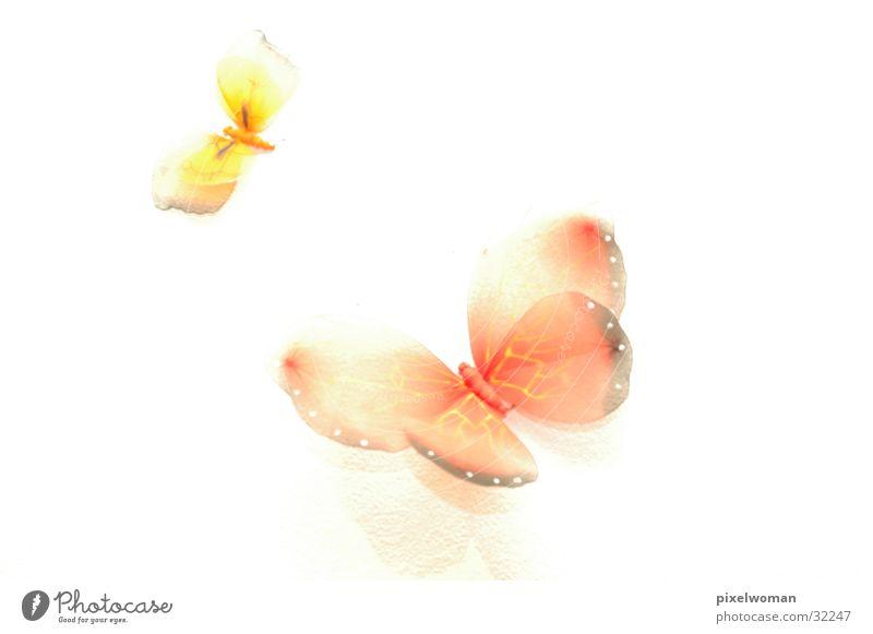 Schmetterlinge rot Tier gelb Fototechnik