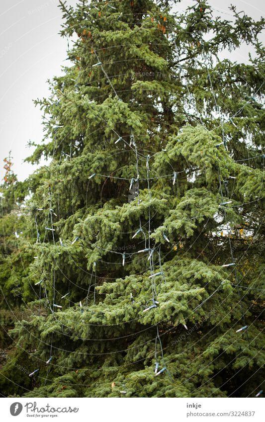 Tannenbaum unbeleuchtet Weihnachten & Advent Winter Baum Nadelbaum Wald Dekoration & Verzierung Lichterkette Weihnachtsbeleuchtung Weihnachtsbaum hängen