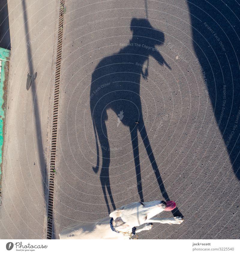 heißer Hund Sommer Tier Freude Wärme Wege & Pfade Gefühle Stimmung Perspektive laufen Schönes Wetter Coolness Gelassenheit dünn lang hängen Surrealismus