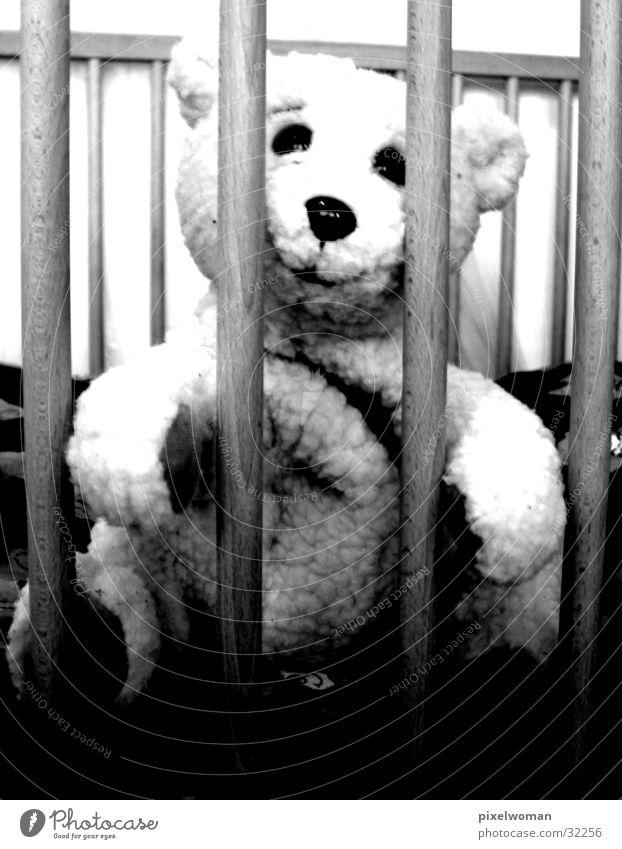Teddybär Tier Bär Stofftiere Fototechnik