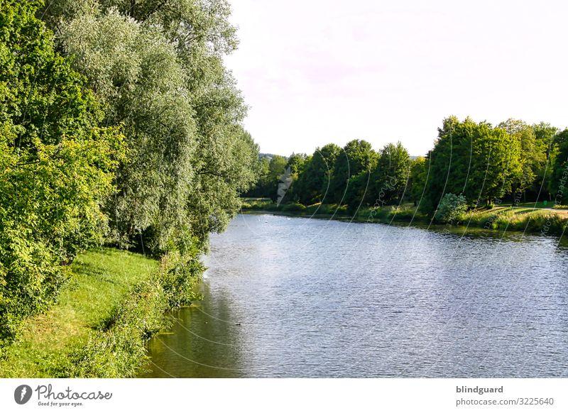 The last survivor of years gone by Main Mainufer Fluss Flussufer Sommer Wellen Wasser Flora Biegung Himmel Hanau Farbfoto Natur Umwelt Schönes Wetter Landschaft