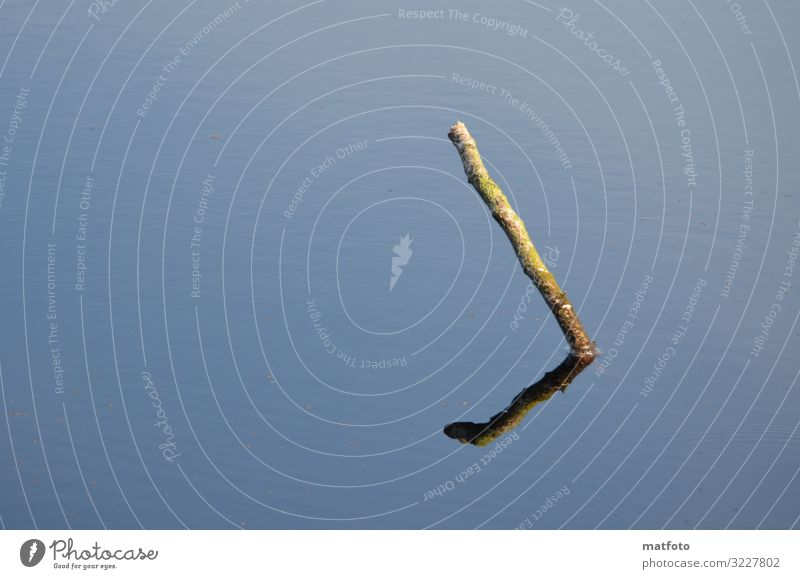 Ast im Wasser Umwelt Natur Pflanze Tier Sonne Sommer Teich Menschenleer Holz außergewöhnlich dünn blau Stimmung Zufriedenheit Kunst Farbfoto Außenaufnahme