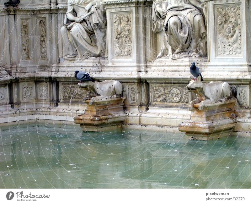 Brunnen [wolf] alt Architektur Italien Wahrzeichen Wolf