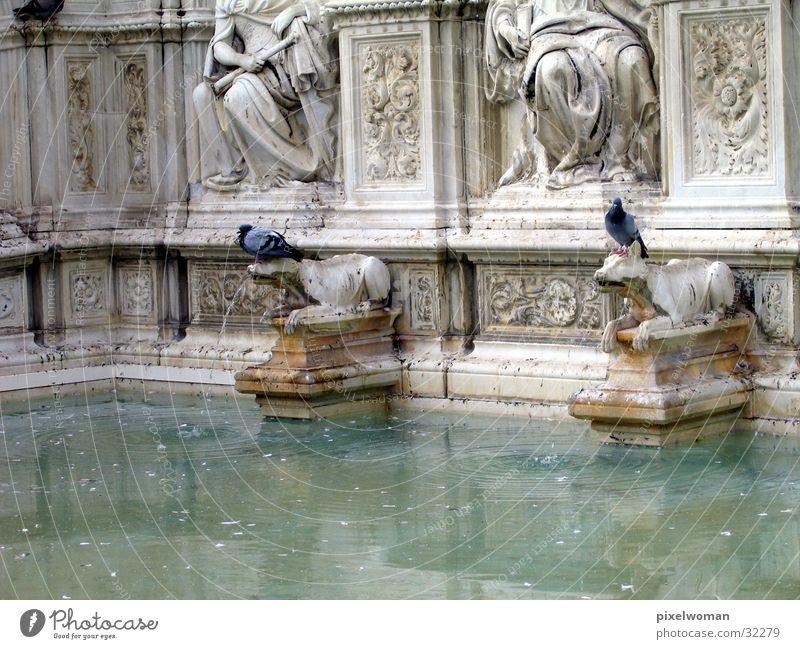 Brunnen [wolf] Wahrzeichen Wolf Italien Architektur alt