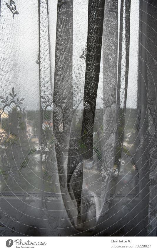 Hinter deutschen Gardinen Einsamkeit Fenster Innenarchitektur grau Häusliches Leben Dekoration & Verzierung Horizont Angst retro Glas Idylle