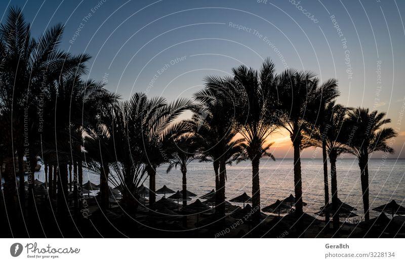 Landschaft am Abend bei Sonnenuntergang in Ägypten Erholung Ferien & Urlaub & Reisen Sommer Strand Meer Wellen Finger Natur Pflanze Wolken Klima Baum Urwald
