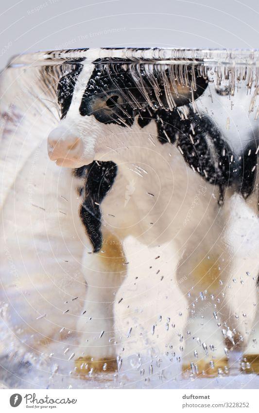 coole Kuh weiß Tier Winter schwarz Umwelt Gefühle klein außergewöhnlich Häusliches Leben Ernährung Dekoration & Verzierung träumen Kindheit Kreativität niedlich