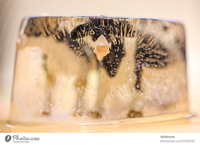 Die Kuh vom Eis holen Weihnachten & Advent Pflanze Tier Winter Umwelt außergewöhnlich Ernährung Dekoration & Verzierung verrückt Klima Schutz Sicherheit Frost
