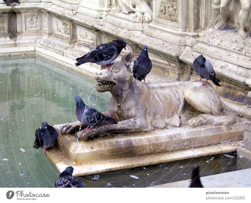 Wolf Tier Architektur Italien Skulptur