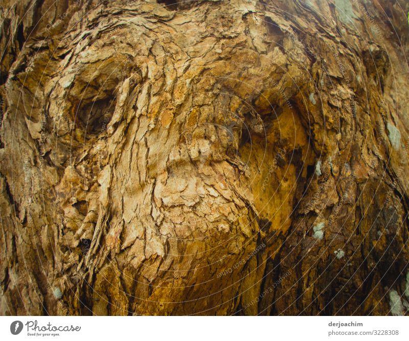 Baumgesicht Freude Zufriedenheit Ausflug Sommer Natur Schönes Wetter Urwald Queensland Australien Menschenleer Gesichtsausdruck Holz beobachten entdecken