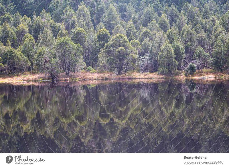 Spiegelei Natur grün Wasser Landschaft Baum Erholung ruhig Wald dunkel Herbst Wege & Pfade außergewöhnlich braun Zufriedenheit Wetter Erde