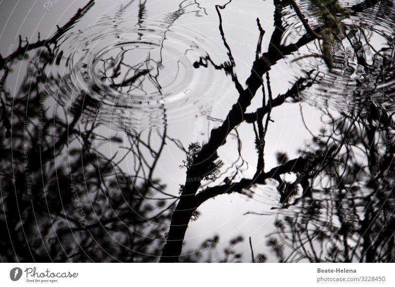 Licht und Schatten: Wasserkreise im Schatten von Bäumen schwarz-weiß Spiegelung Äste Außenaufnahme Reflexion & Spiegelung Umwelt Menschenleer Landschaft ruhig