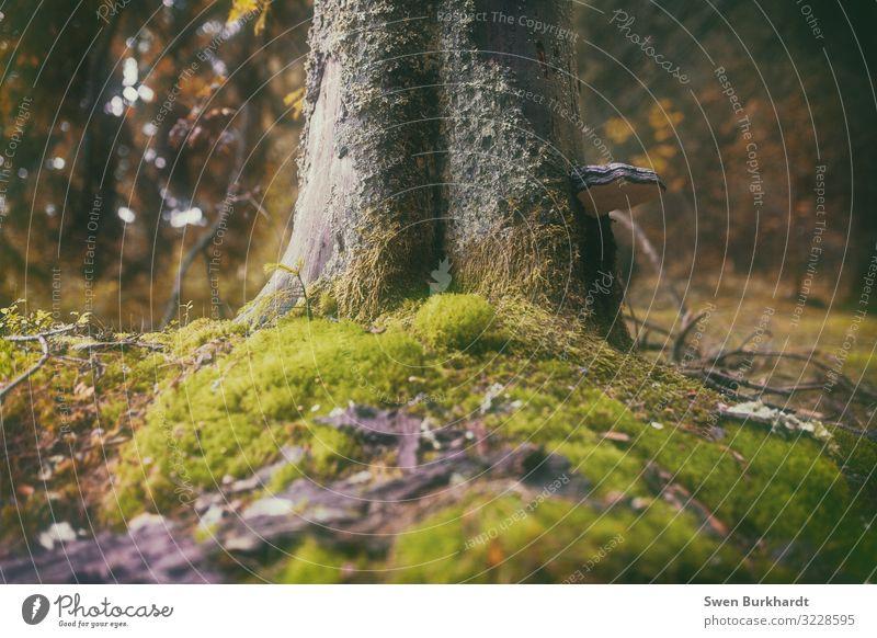 Leg dich nieder Umwelt Natur Landschaft Pflanze Tier Urelemente Erde Herbst Klima Klimawandel Nebel Baum Gras Sträucher Moos Blatt Wald Urwald Wärme weich grün