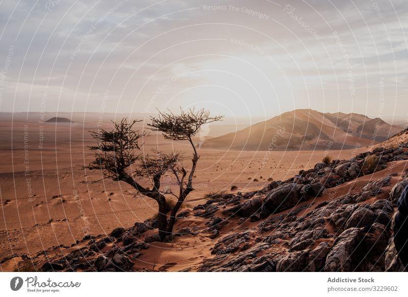 Einsamer Baum in trockener Wüste Hügel wüst Sonnenuntergang Sand Himmel wolkig Felsen Marokko Afrika niemand Landschaft Natur Düne Stein Felsbrocken trocknen