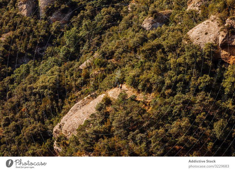 Wanderer zu Fuss auf dem Berg Schlucht Route Gesundheit Entdecker Touristen Sport Katalonien Tourismus grün Baum aktiv im Freien Sonnenlicht laufen Höhe hoch