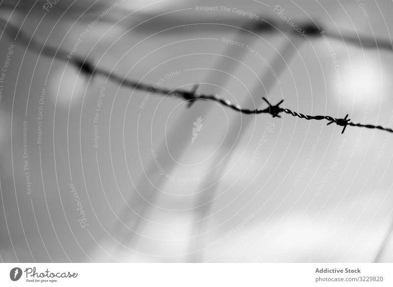 Gespannter Stacheldraht Draht mit Stacheln versehen Metall Stamm gespannt Begrenzung Sicherheit Zaun Verbrechen Gefängnis Schutz Lager Borte Krieg Inhaftierung