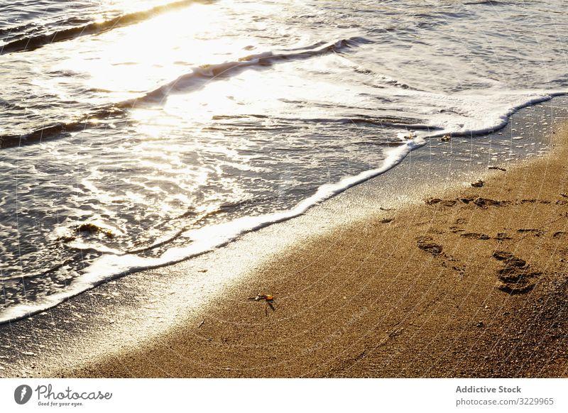 feuchter Sandstrand an einem sonnigen Tag am Strand Ufer nass tagsüber Natur Algen natürlich Boden Küste Oberfläche Uferlinie Saison niemand Pflanze aquatisch