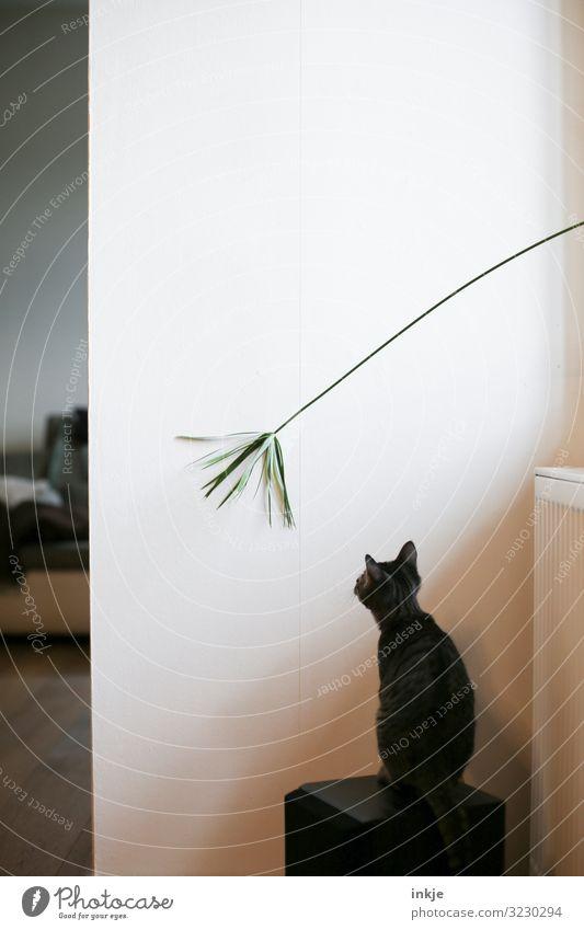 Wenn Flora und Fauna sich treffen. Häusliches Leben Raum Pflanze Grünpflanze Seegras Topfpflanze Haustier Katze 1 Tier Tierjunges beobachten authentisch Neugier