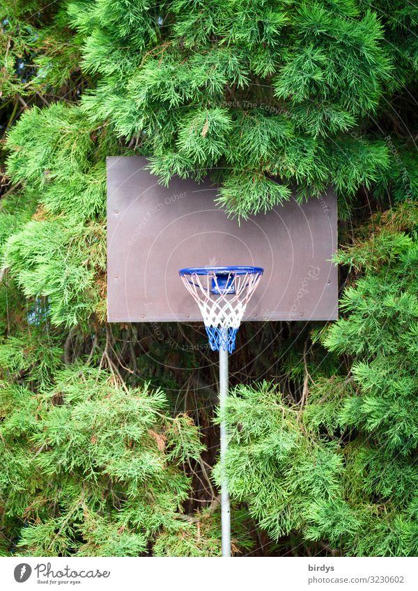 Basketball im Grünen Freizeit & Hobby Spielen Sport Basketballkorb Sommer Baum authentisch natürlich positiv sportlich blau grau grün weiß Vorfreude Fitness